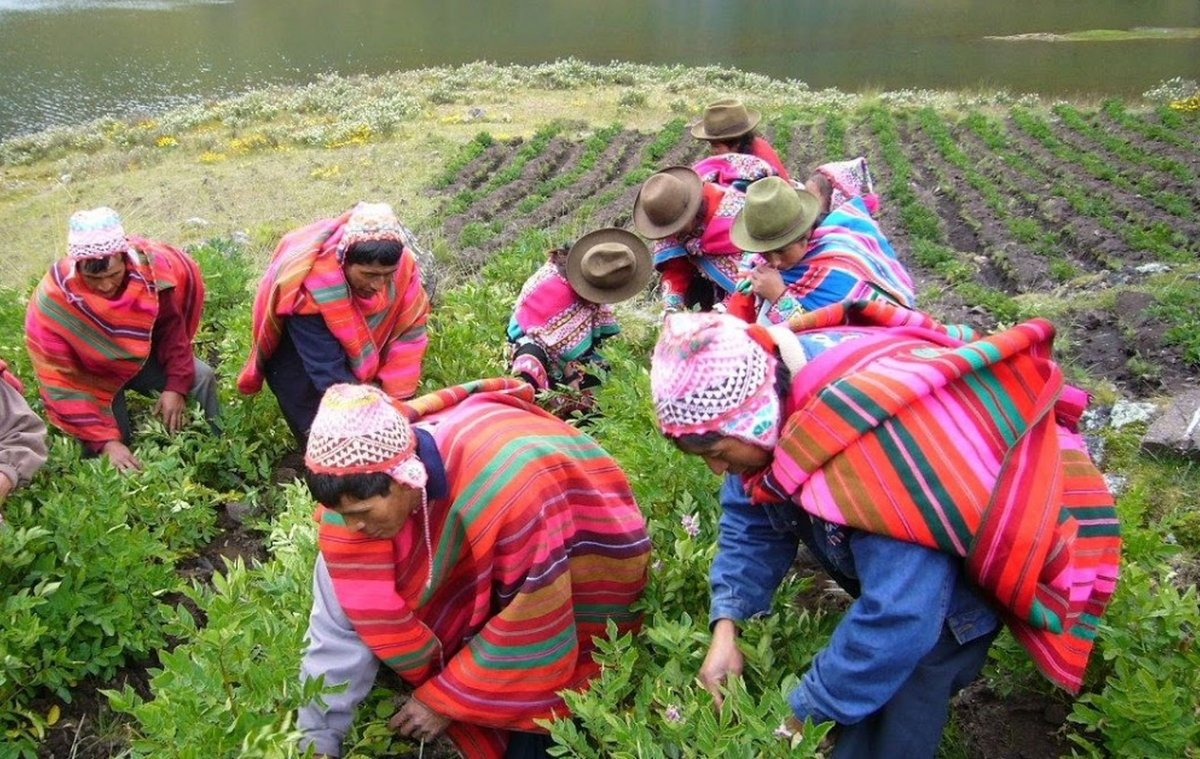 Agricultores andinos