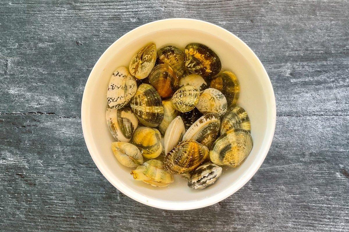 Almejas purgándose en agua con sal