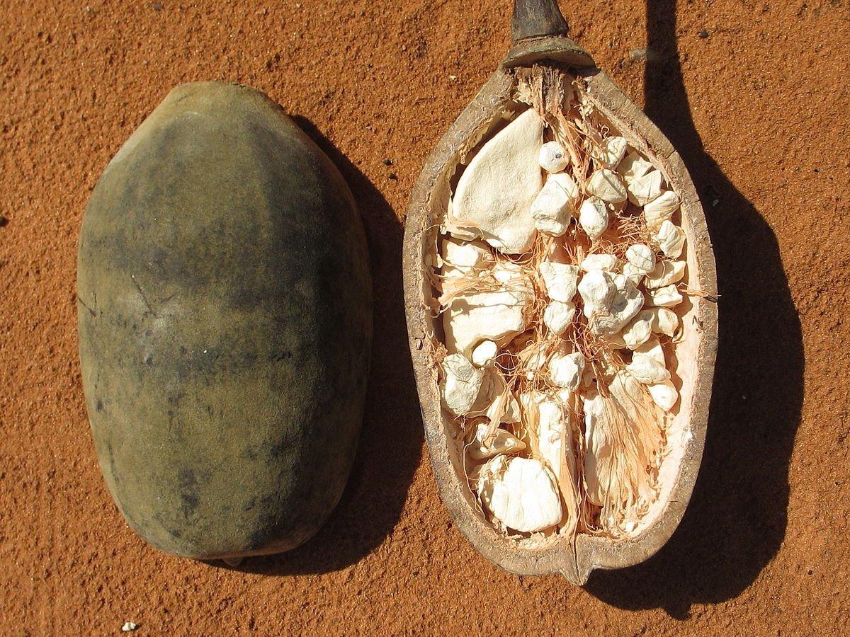 Baobab: una fruta mística que revitaliza el cuerpo