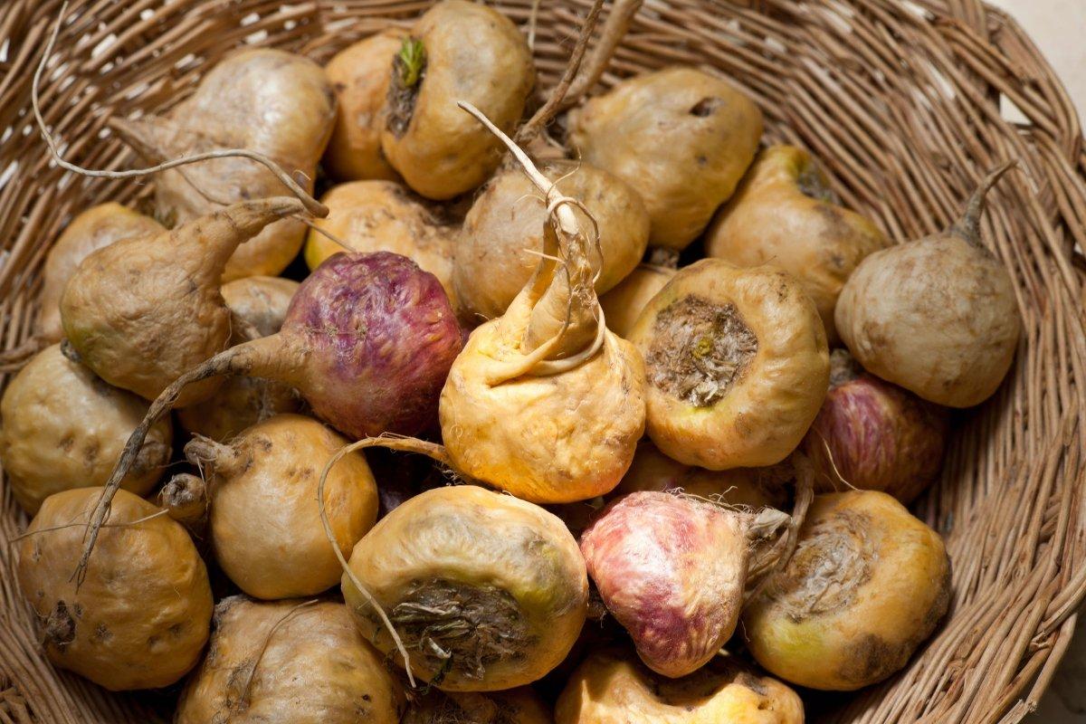 La maca: uno de los alimentos más apreciados por los incas