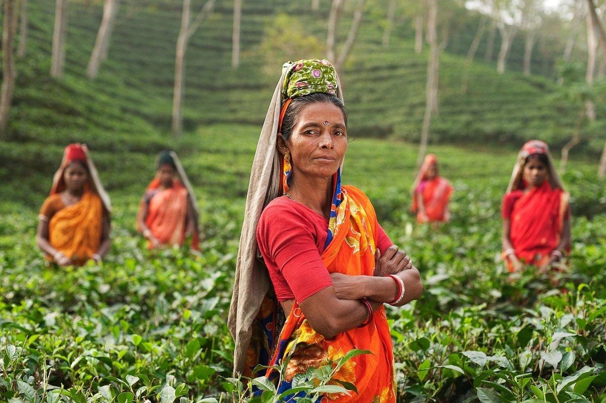 Cultivadoras en un campo