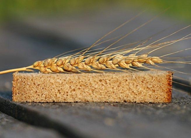 El trigo se reservaba para la elaboración de pan y quedaba prohibido su uso en cervezas