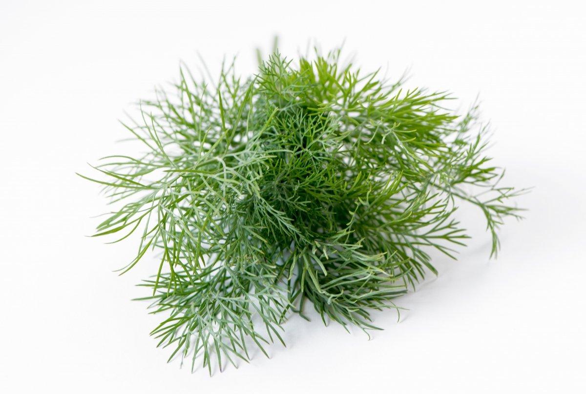 El eneldo: una hierba aromática con personalidad y mucha historia