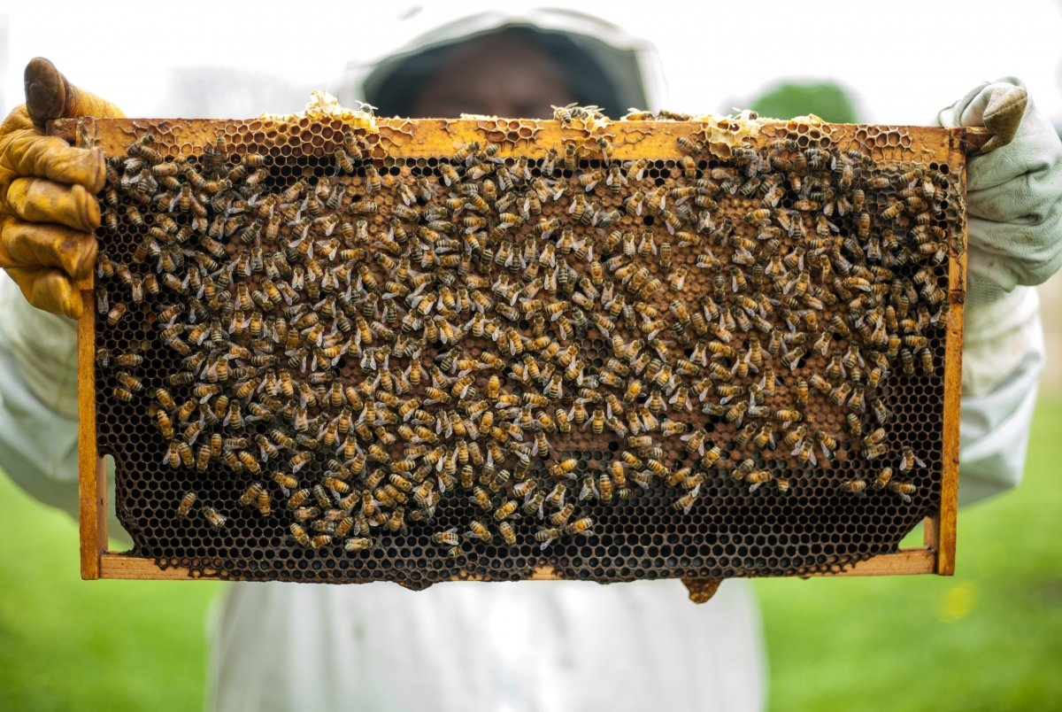 Es una sustancia que resulta del trabajo de las abejas