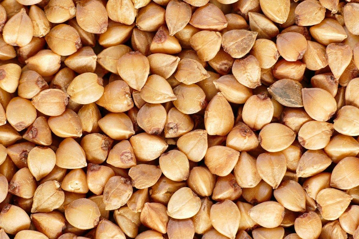 Granos de trigo sarraceno o alforfón