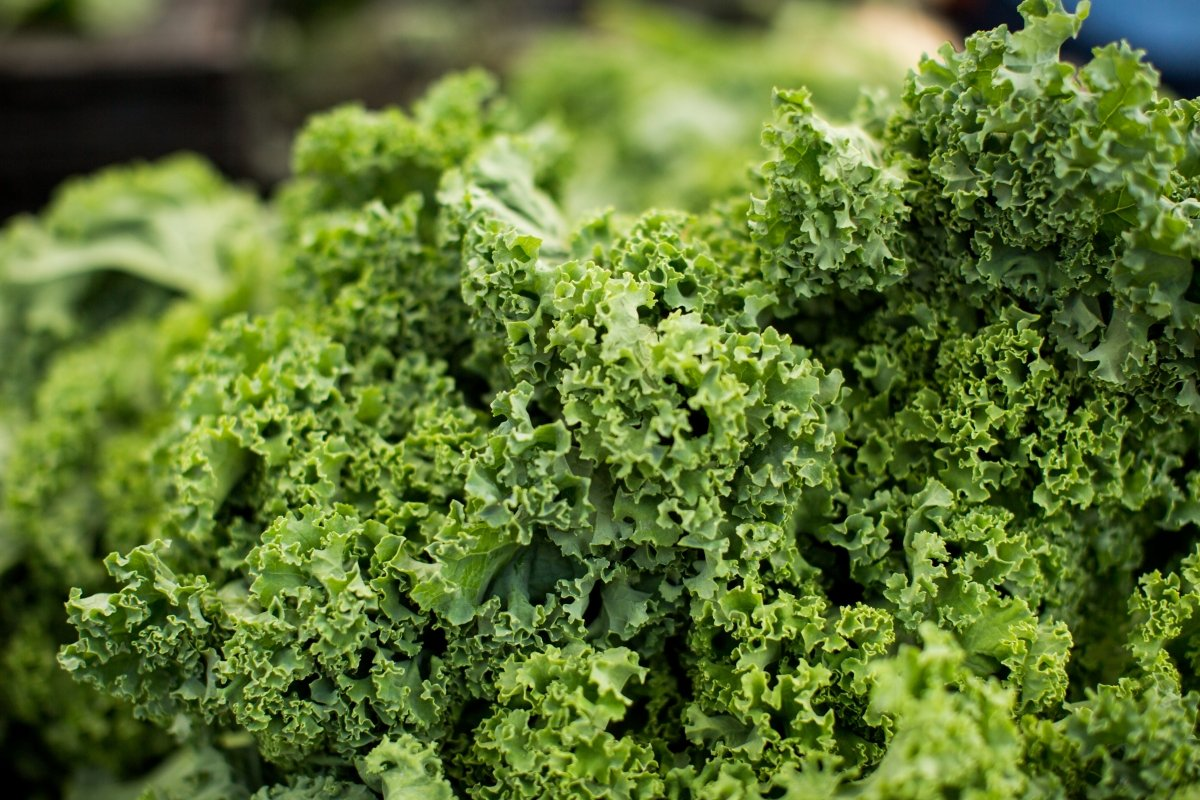 Kale: qué es y cuáles son sus propiedades