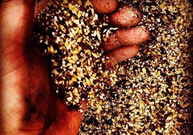 La cebada fue el único cereal permitido por la Ley de Pureza Alemana