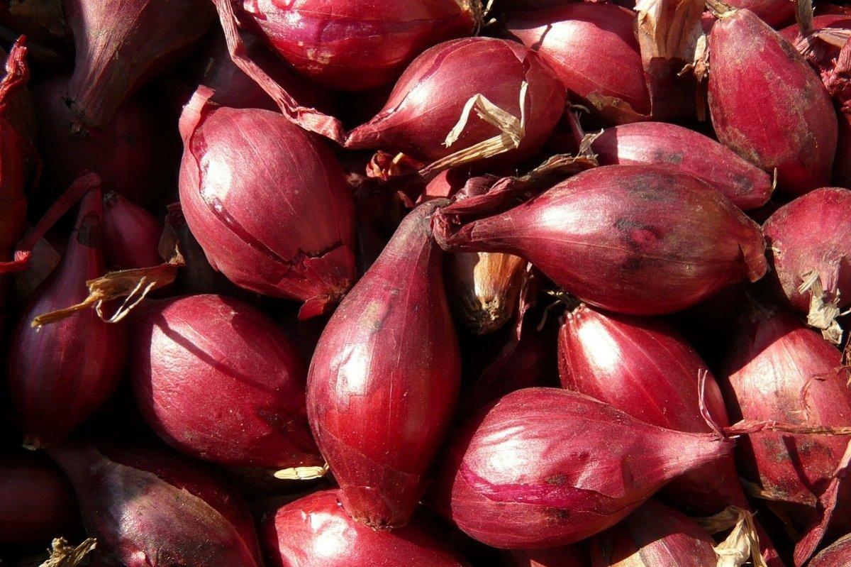 Chalota, el sustituto delicioso de la cebolla