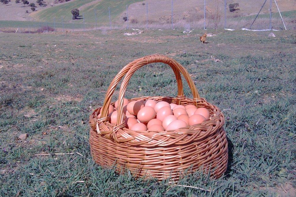 'La de los huevos soy yo', dijo la gallina