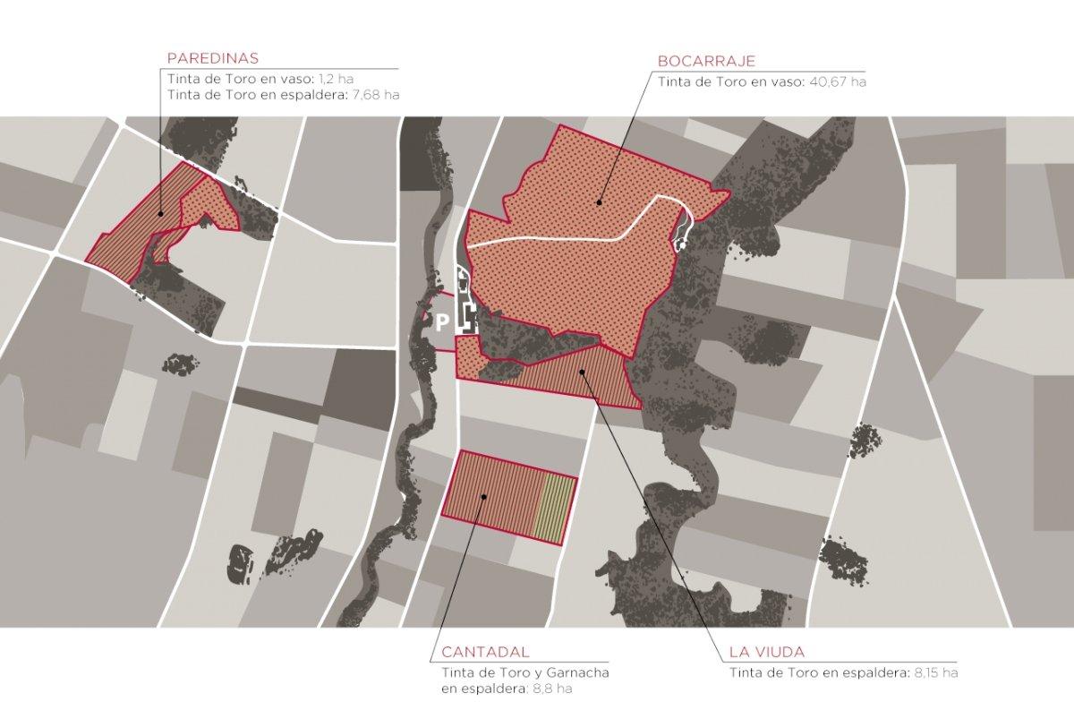 Mapa de Viñedos de Estancia Piedra