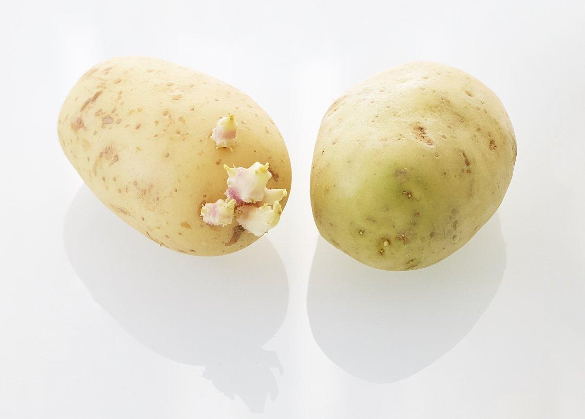 Patatas germinadas y verdes con solanina