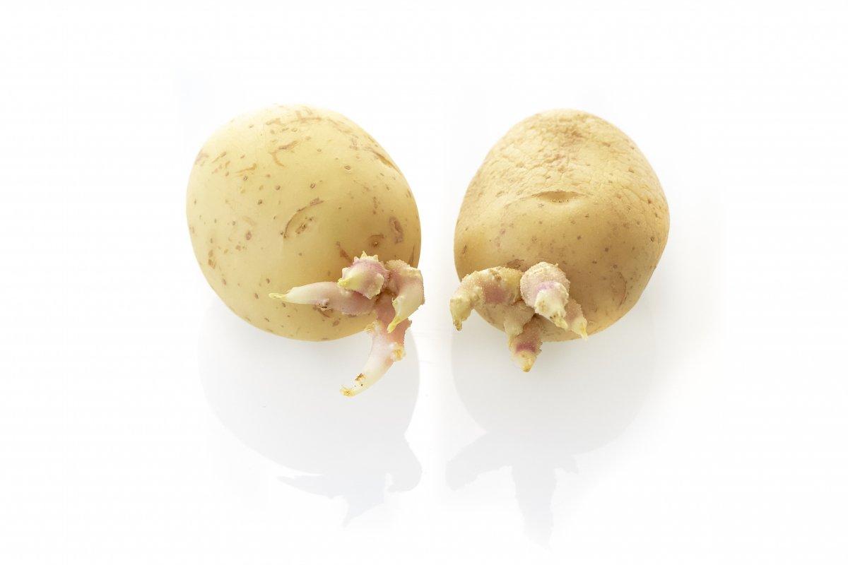 Patatas germinadas