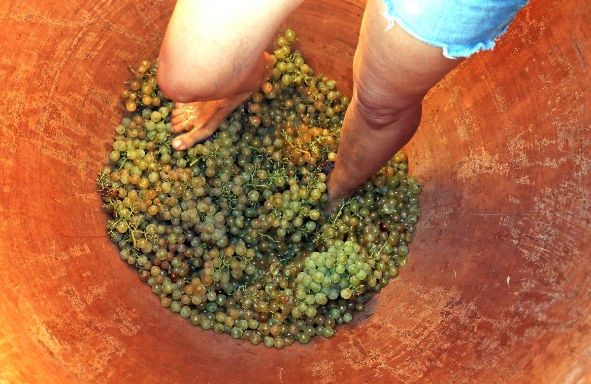 Pisado de la uva en ánfora