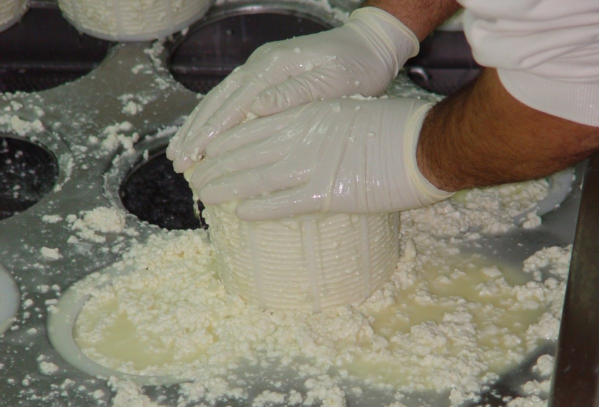 Proceso de elaboración del queso Torta del Casar