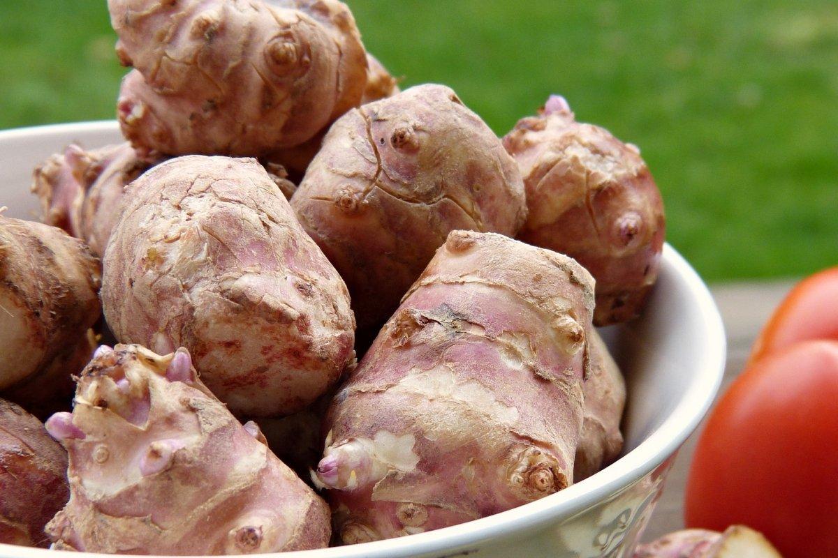 Topinambur, tupinambo, pataca o alcachofas de jerusalén