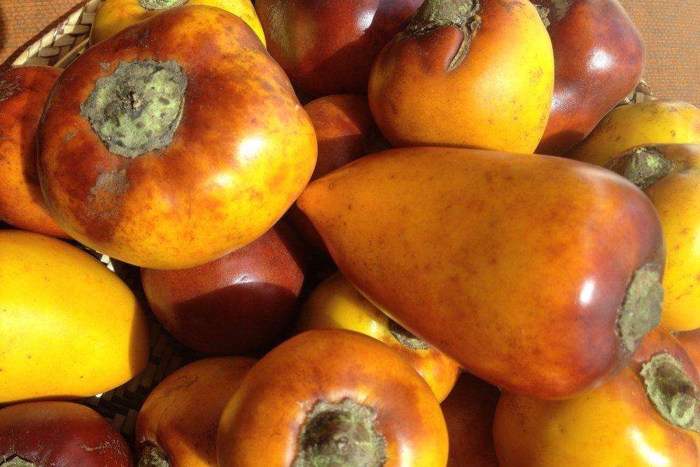 El túpiro, el nutritivo fruto del Amazonas