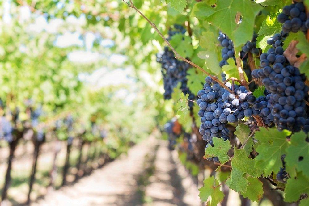 Los vinos bodegas Abel Mendoza Monge, riojas diferentes y cotizados